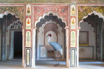 'The search for sattva, Ahhichatragarh Fort, Nagaur' by Karen Knorr
