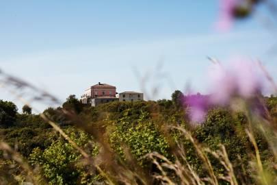 Adjacent former vineyard