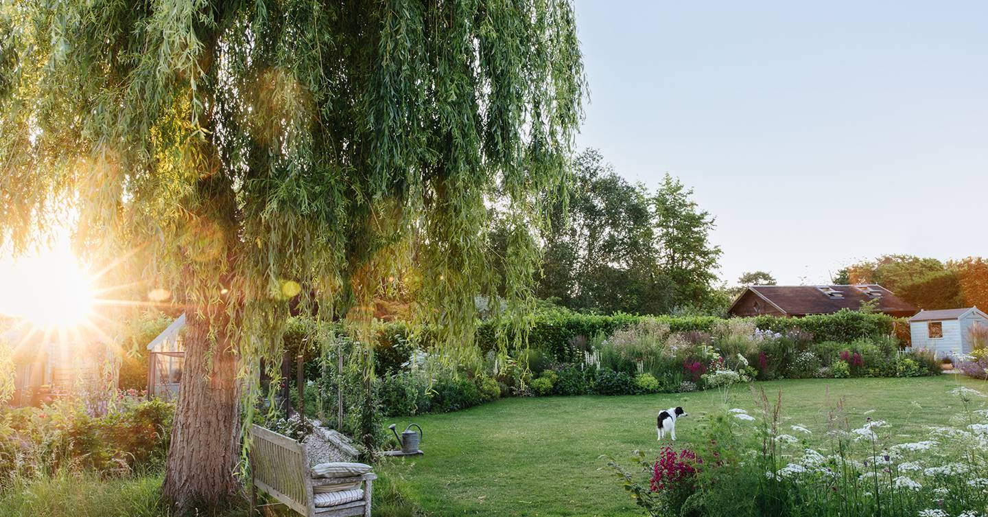 How our garden editor Clare Foster created a cottage garden from scratch in three years